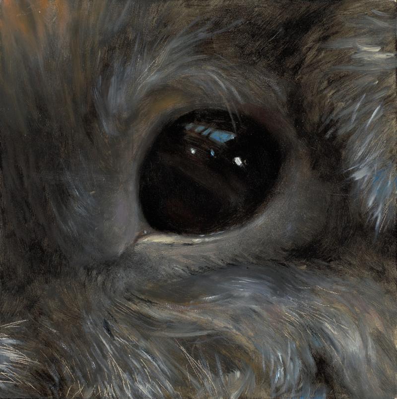 Rabbit eye  6%22x6%22 oil on panel
