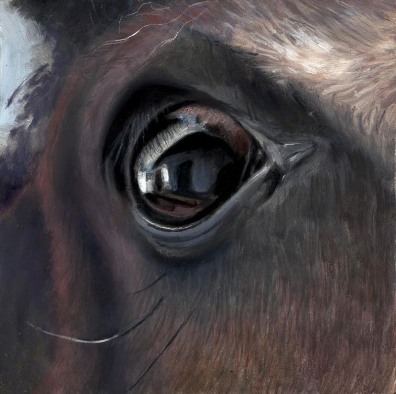 6%22x6%22 horse eye from eye series copy 2