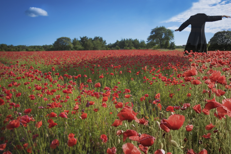 ©Florence-Montmare-Fine-Art-Photographer-Bergman-Island-Poppyfield-2